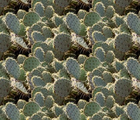 cactus fabric by lauraelysha on Spoonflower - custom fabric