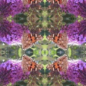 060711_butterflybush_crop