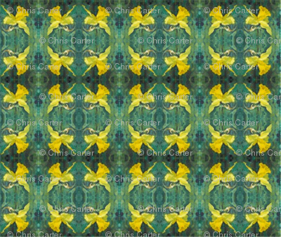 daffodils-mirror-repeat-chris-carter