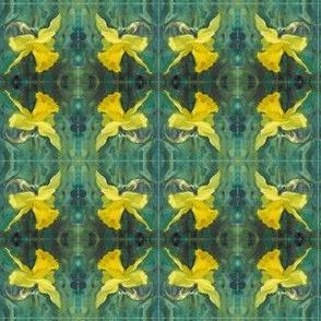 daffodil-close-up-repeat-03-chris-carter