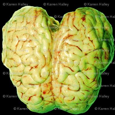 Zombie Brain Reign