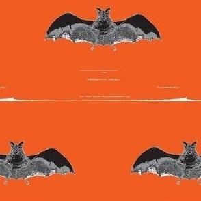 Vintage Printable - Bat zoological illustration- Orange background