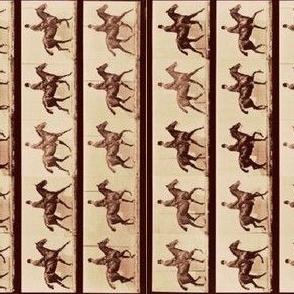 Horse Gaits Sepia Vertical