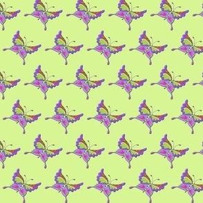 Butterfly green~purple