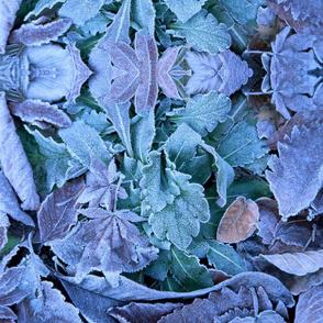Leaf 0