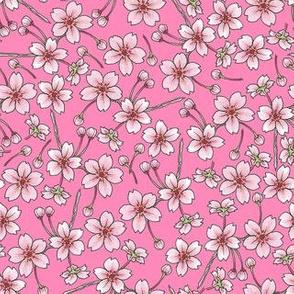 Sakura - Pink (80%)