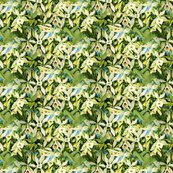 Rrvanilla_orchid_fabric_ed_shop_thumb