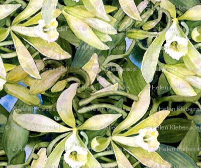 Vanilla Orchid Too