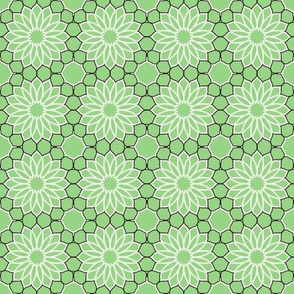Rock Daisies green
