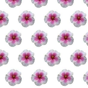 Tikiflower