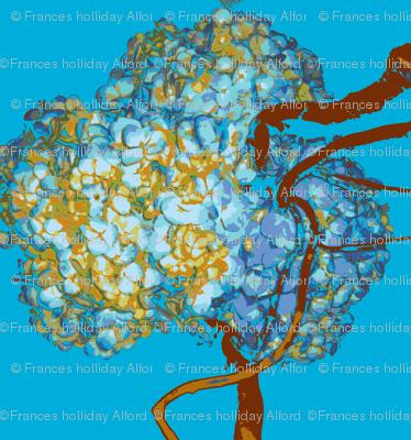Hyacinthe Blue