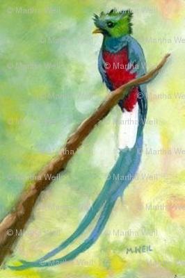 quetzal ed