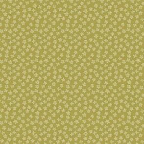 Eucalyptus coordinate olive