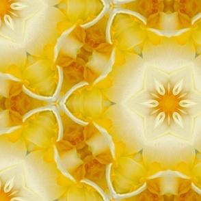 Kaleidoscope Daffodils II