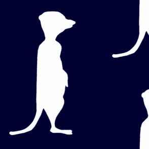 meerkat  royalblue