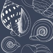 Rrrrseashell_sketch5_shop_thumb