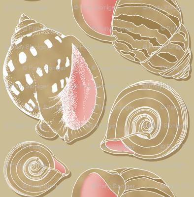 Sketchy Seashells
