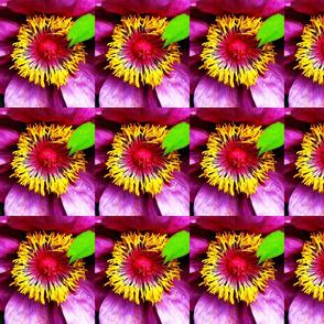 Taft Blooms
