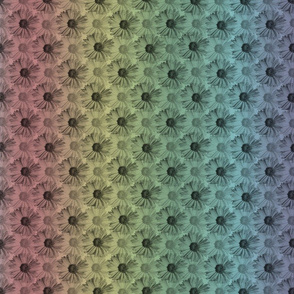 Field of Daisies - rainbow