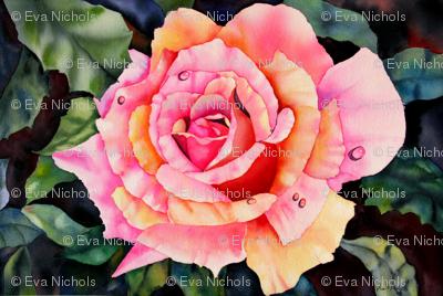 Sunkissed Rose II