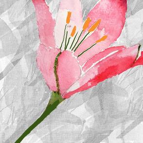 Pink Daylily large