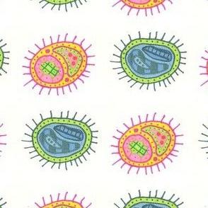 duobacteria1