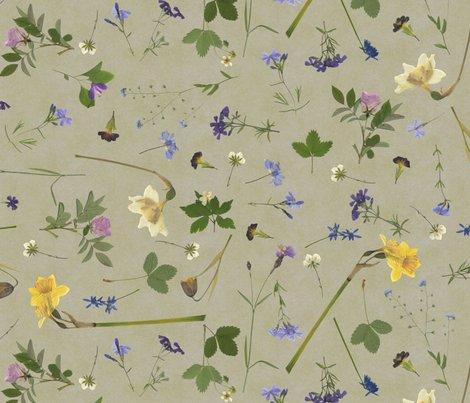 Rrr0_dried-flowers-3_shop_preview