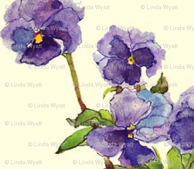 pansies_SPN_crop