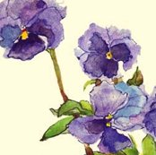 Rpansies_spn_crop_shop_thumb