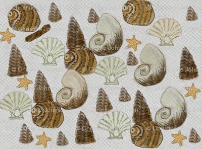Sea shells  / Dk