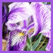 Blue Iris Lattice