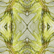 Organics in Lime