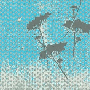 Queen Anns Lace Aqua Dots