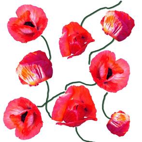 poppies_on_white_copy