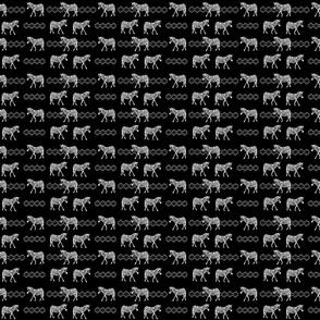 Zebra_Walk_-_Black