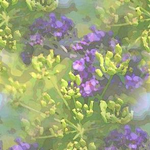 Buddleia x parsnip M