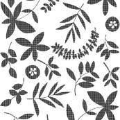 Botanical Crosshatch-Black