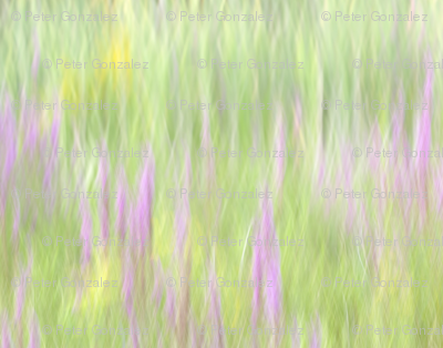 Rfield_of_grass_copy_preview