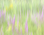 Rfield_of_grass_copy_thumb
