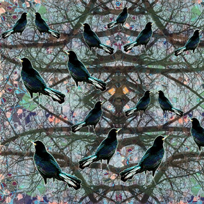 Crows in the Tree Tops