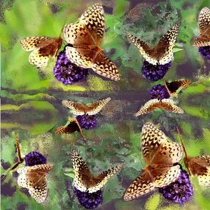 Butterfly - Bush