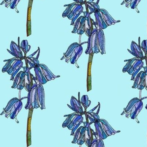 bluebell in light blue