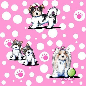 LG Biewer Yorkie Terriers On Pink