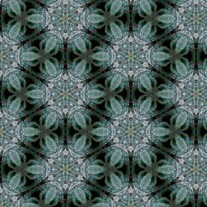 Aloe17b1A