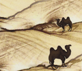 Rwhen_a_camel_meets_a_camel_a_coming_through_the_sand_comment_97001_thumb