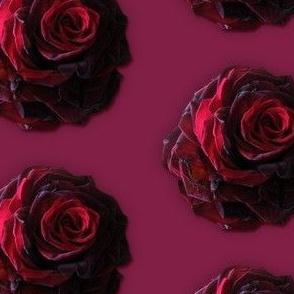 Guinevere's Rose