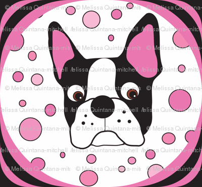 Spike the Boston Terrier Repeat