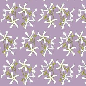 Purple Jasmine