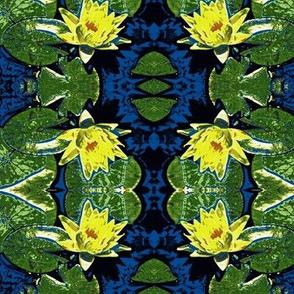 Water Lily Wonderland