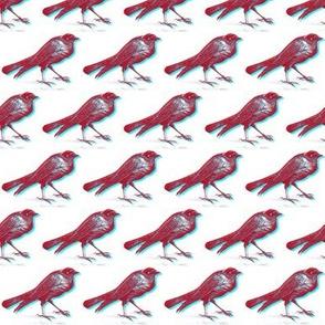 stereo birds